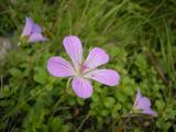 SIRANE2011_FLOWER